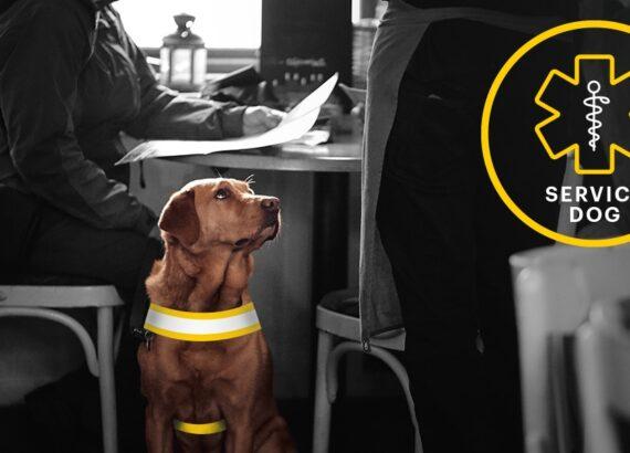 Service Dog in Restaurant